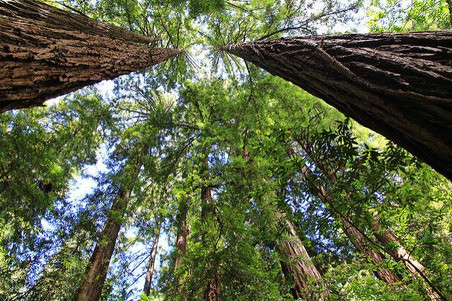 Muir Woods en San Francisco