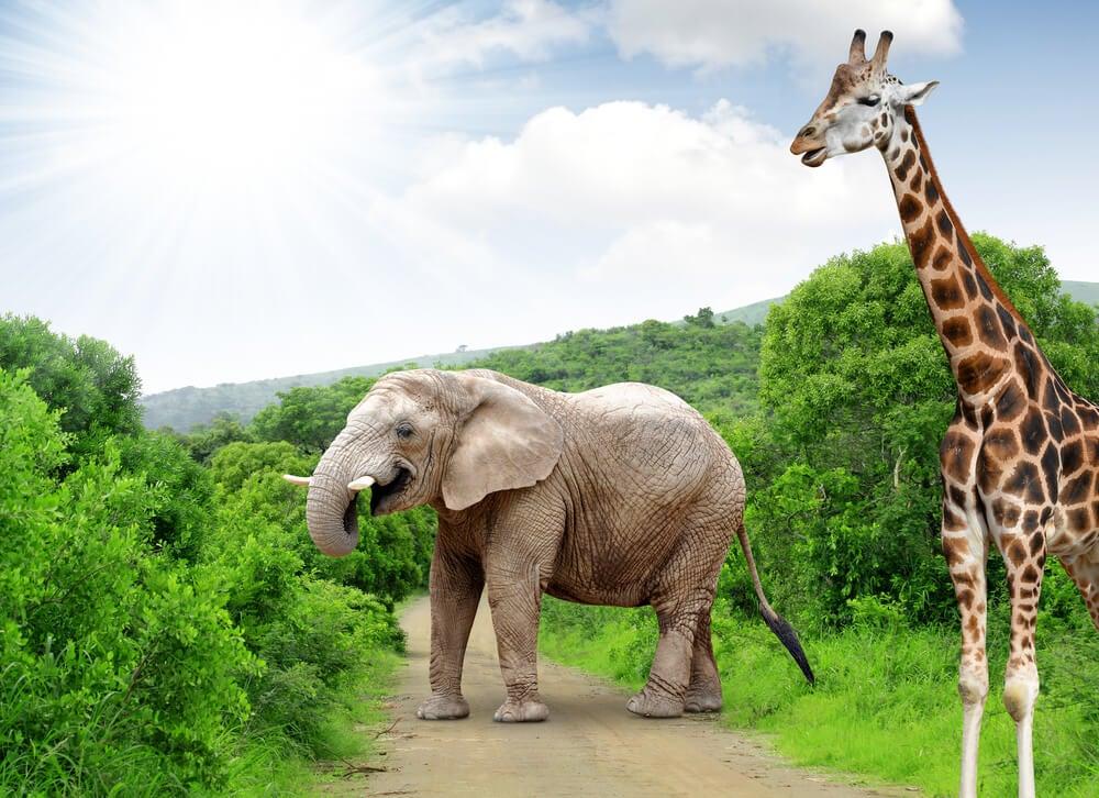 De safari fotográfico por el Parque Kruger