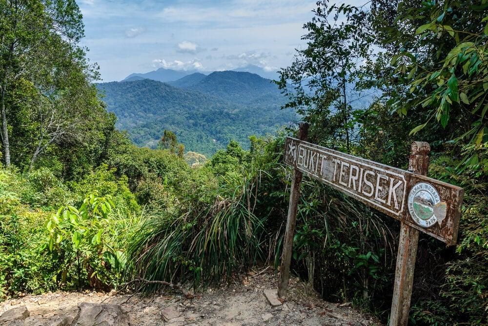 Vista de Taman Negara desde el pico Bukik Teresek