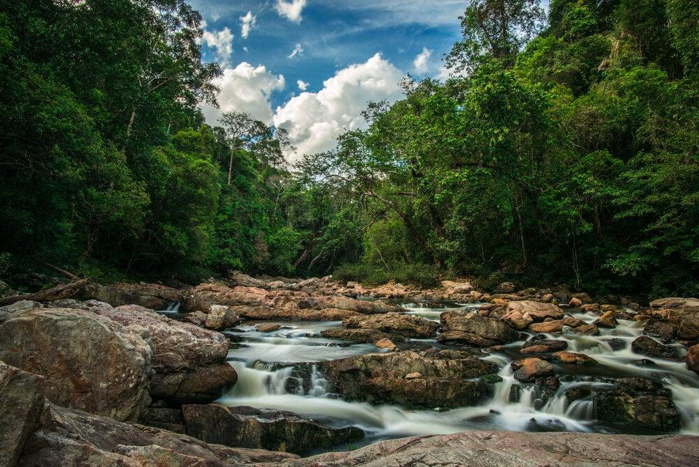 Bosque de Taman Negara en Malasia