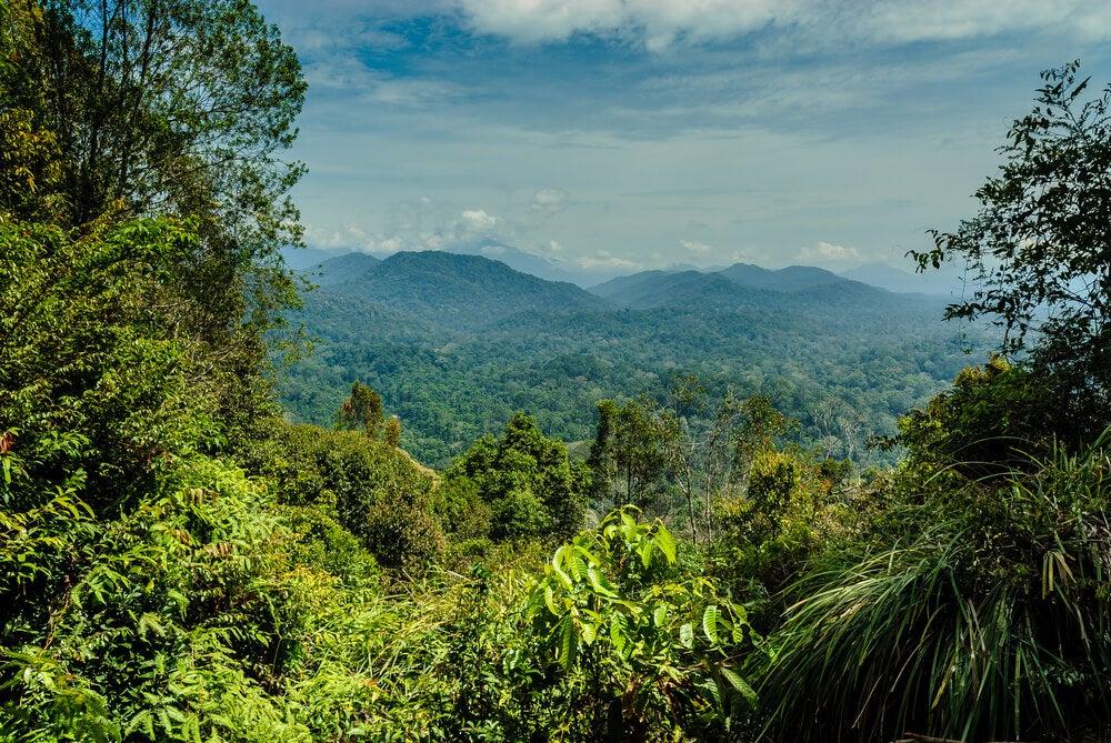 Taman Negara, la selva más antigua del mundo
