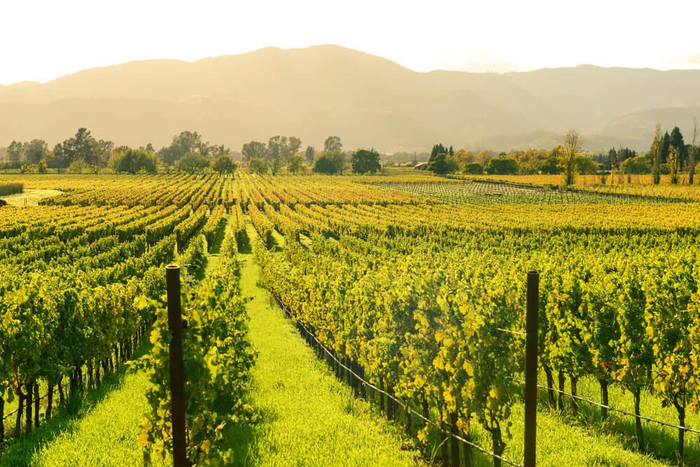 Disfruta de los mejores vinos del valle de Napa en California