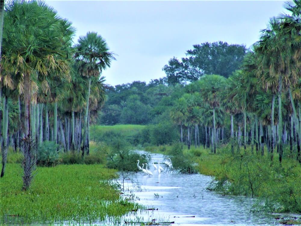 Paisaje del Chaco paraguayo