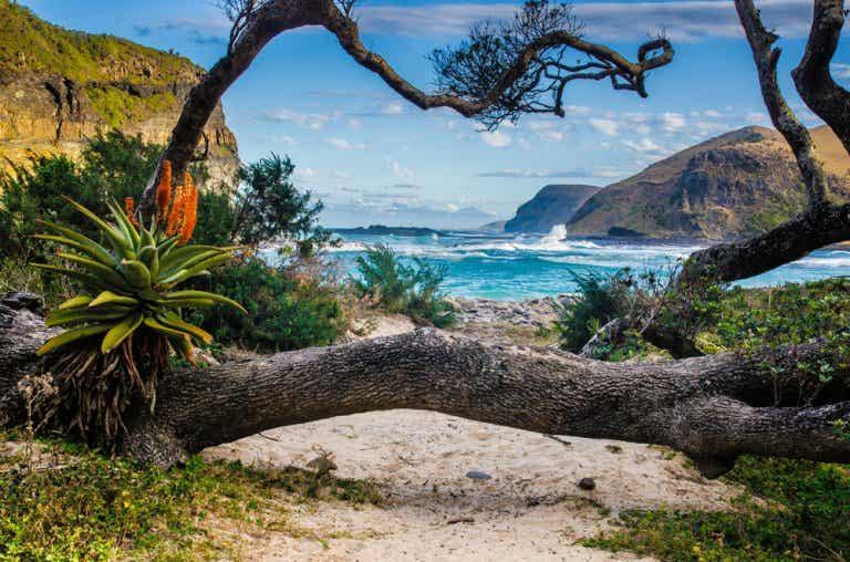 Viajar a Sudáfrica: consejos para disfrutar de la aventura