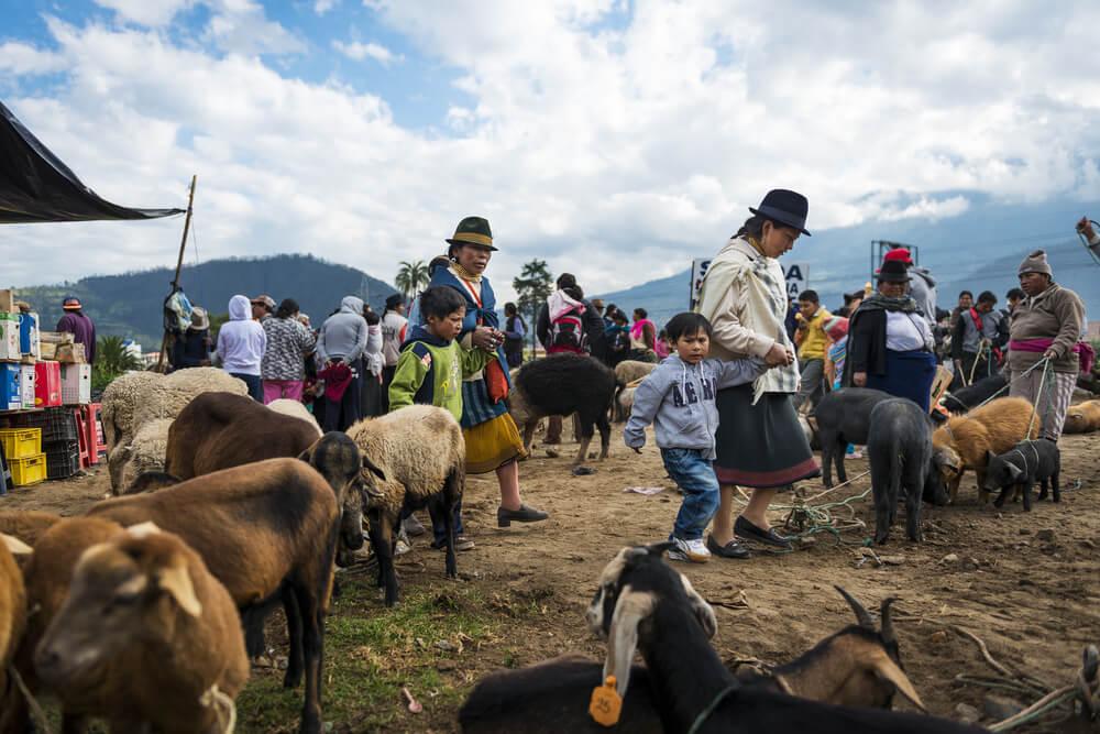 Un paseo por la feria de animales de Otavalo
