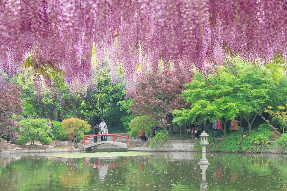 Jiading Wistaria Garden en Shanghái