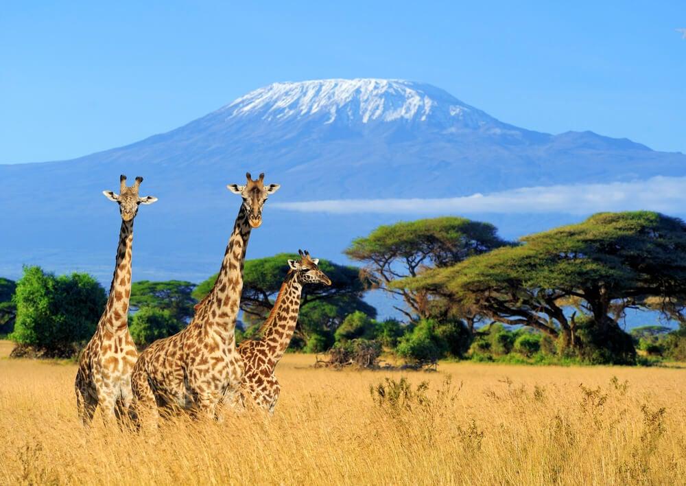 Viajar a Kenia: disfruta con estos planes imprescindibles