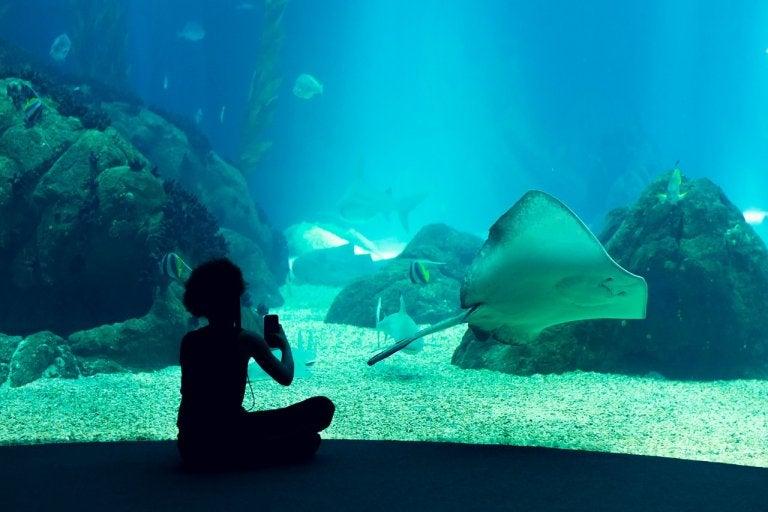 Conoce el Oceanario de Lisboa en Portugal