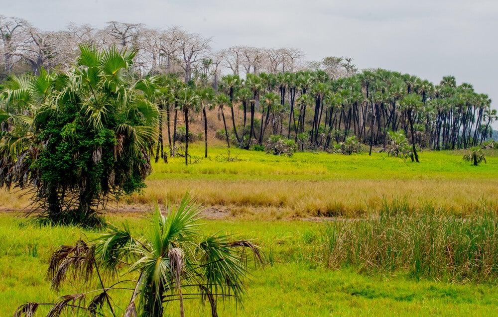 Una excursión al Parque Nacional de Kissama, en Angola