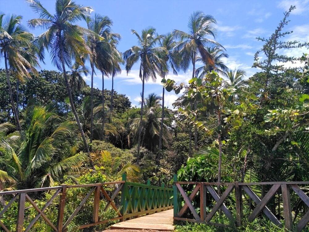 Interior del Refugio Nacional de Vida Silvestre de Gandoca