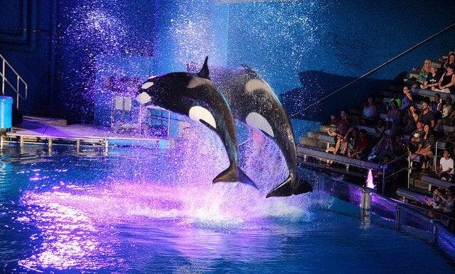 Espectáculo en Seaworld Orlando
