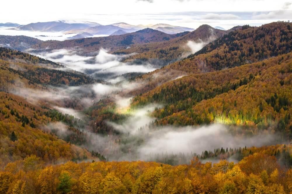 Vista de la Selva de Irati en España