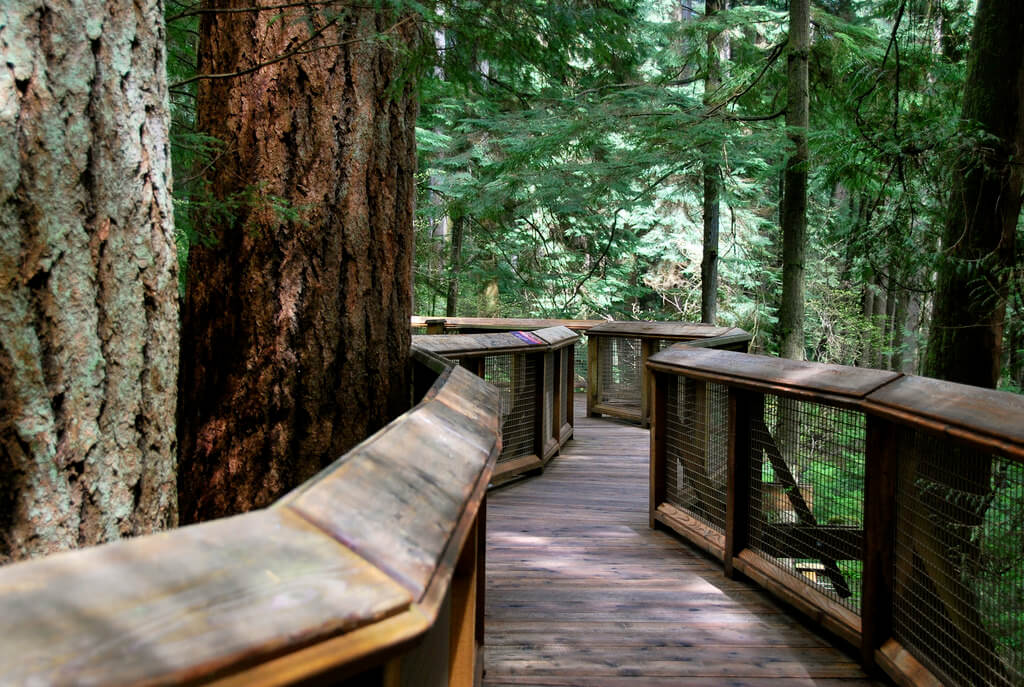 Treetops en Capilano Suspension Bridge