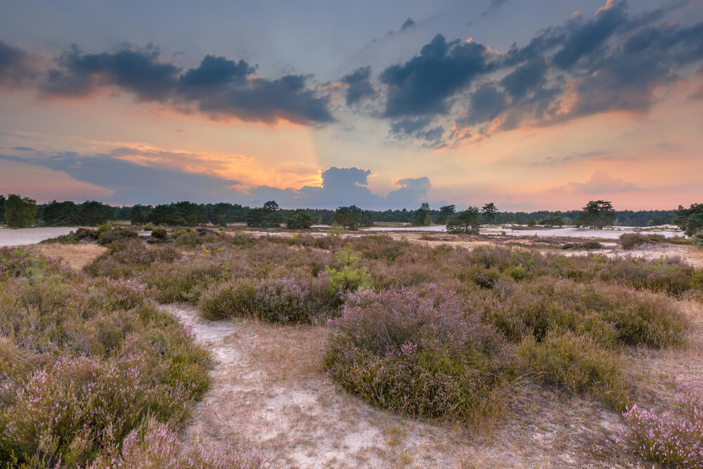 Parque Nacional Utrechtse Heuvelrug