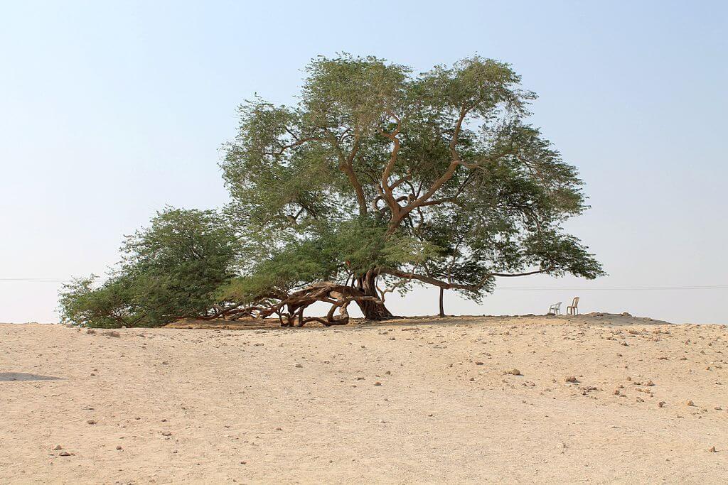 Árbol de la Vida en Barhéin