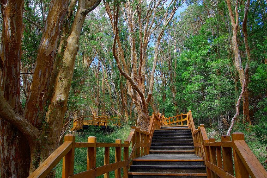 Pasarela en el bosque de Los Arrayanes en Villa La Angostura