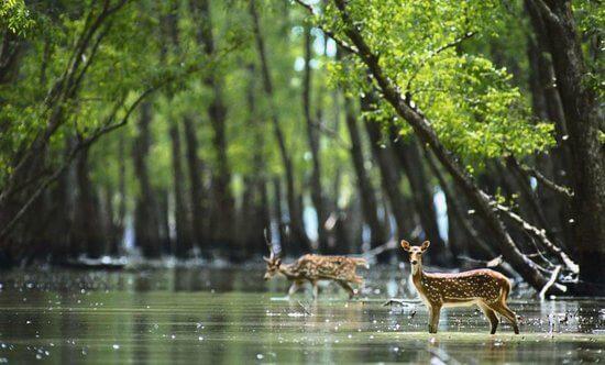 Parque Nacional de Sundarbans