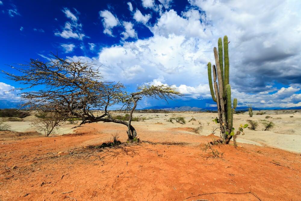 Vegetación del desierto de la Tatacoa