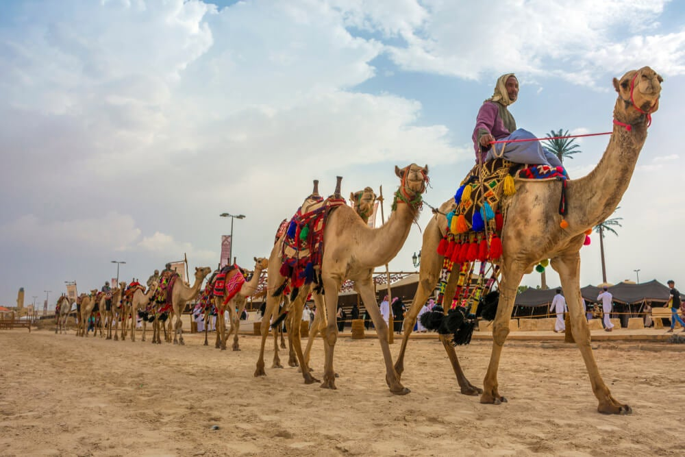 Descubre el festival de camellos de Arabia Saudí