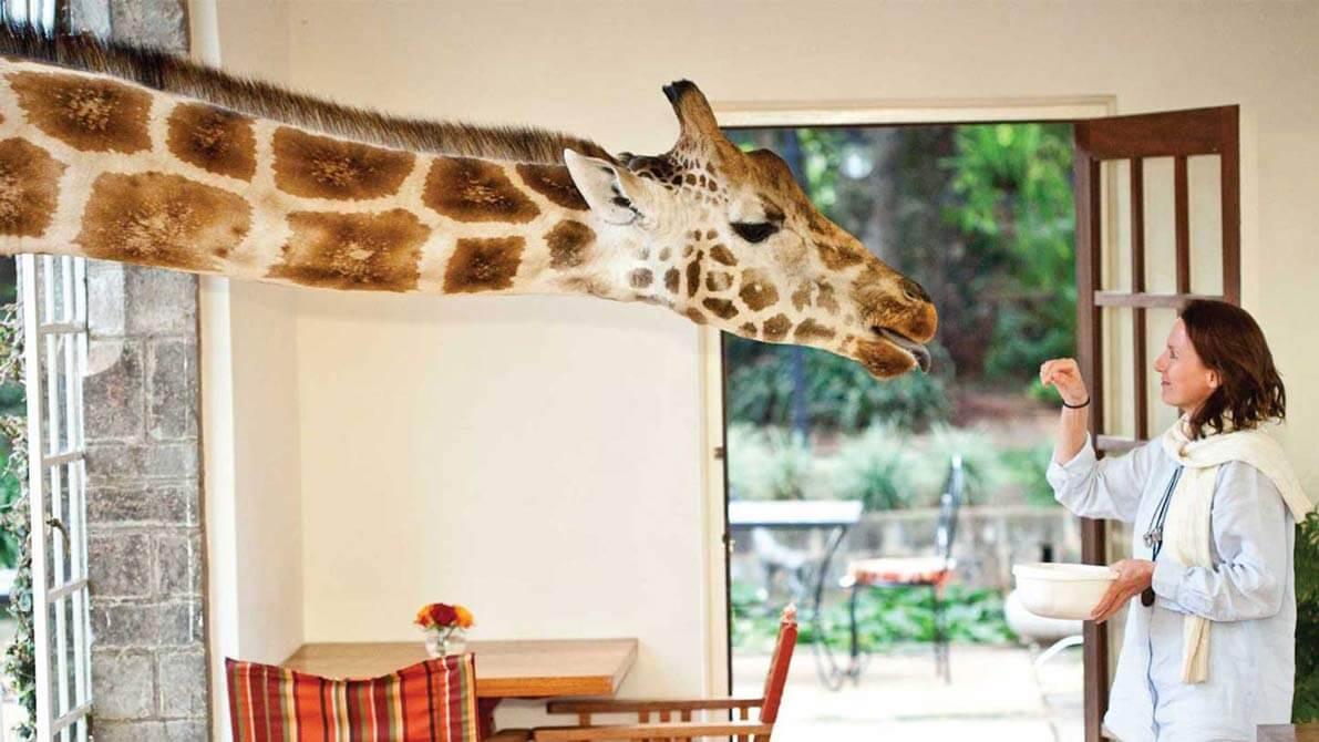 Hotel Giraffe Mannor