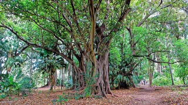 Jardín d'Essai en Argel