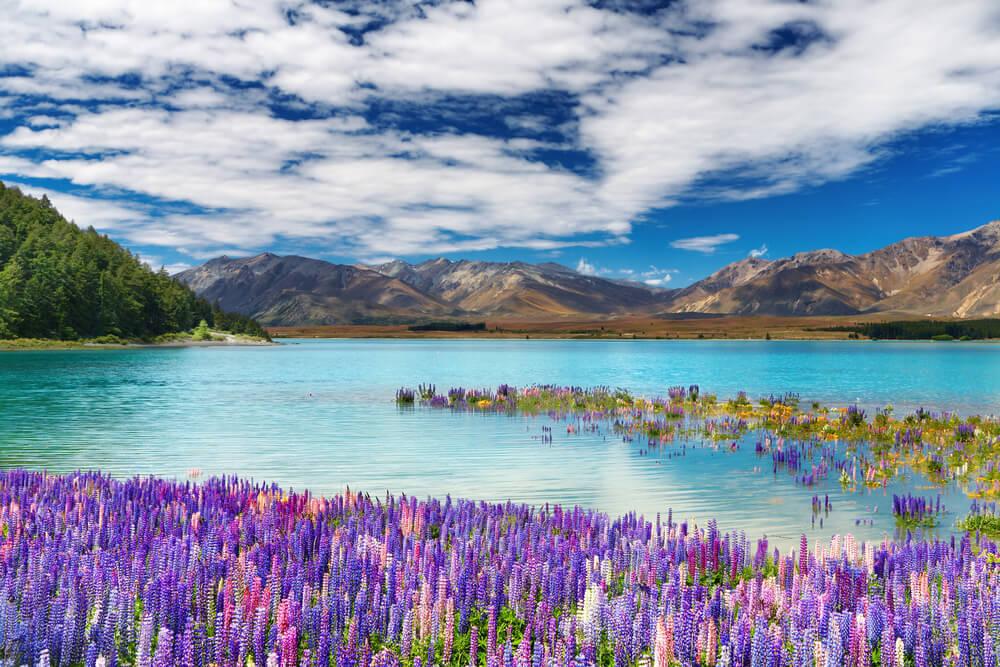 5 cosas que puedes hacer en el lago Tekapo