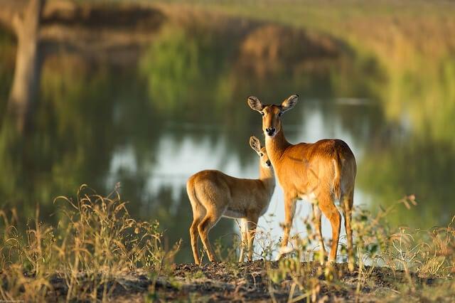 Parque Nacional del Sur de Luangwa en Zambia