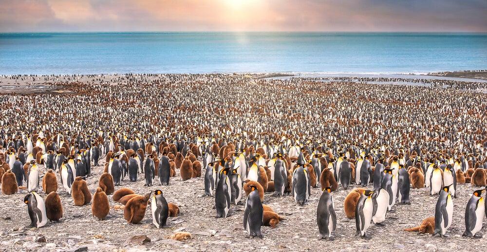 Colonia de Pingüinos en Georgia del Sur