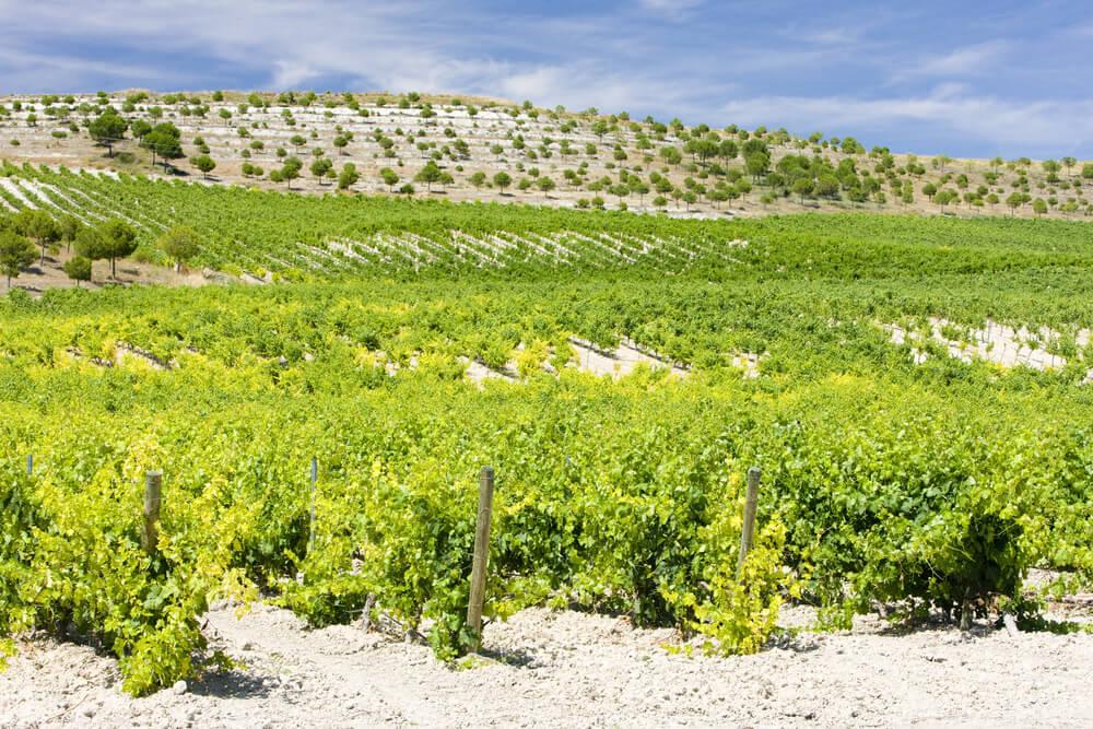 Qué ver en ruta del vino de Cigales en Valladolid