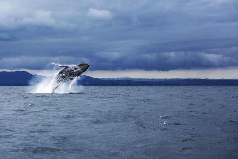 Países donde puedes disfrutar del avistamiento de ballenas