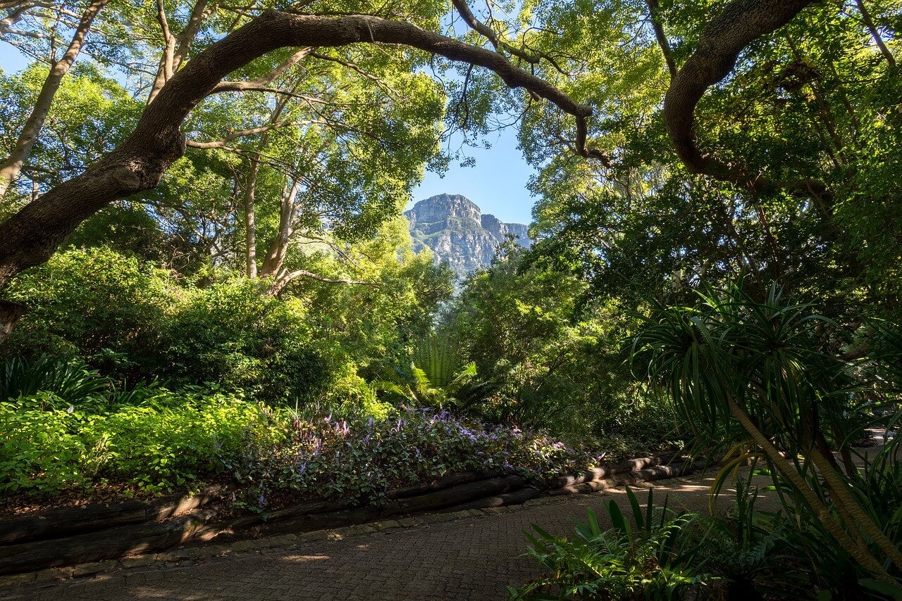 Sendero dentro del jardín de Kirstenbosch
