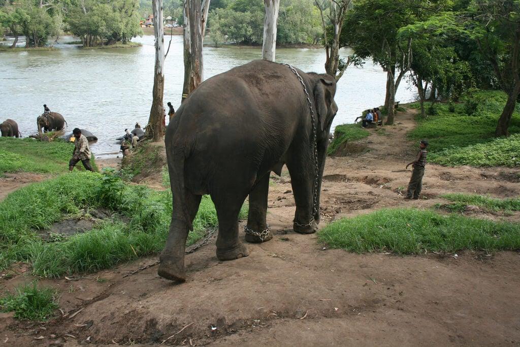 Elefantes en Coorg