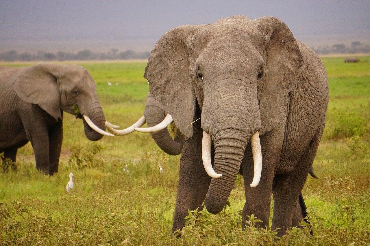 Elefantes en su hábitat