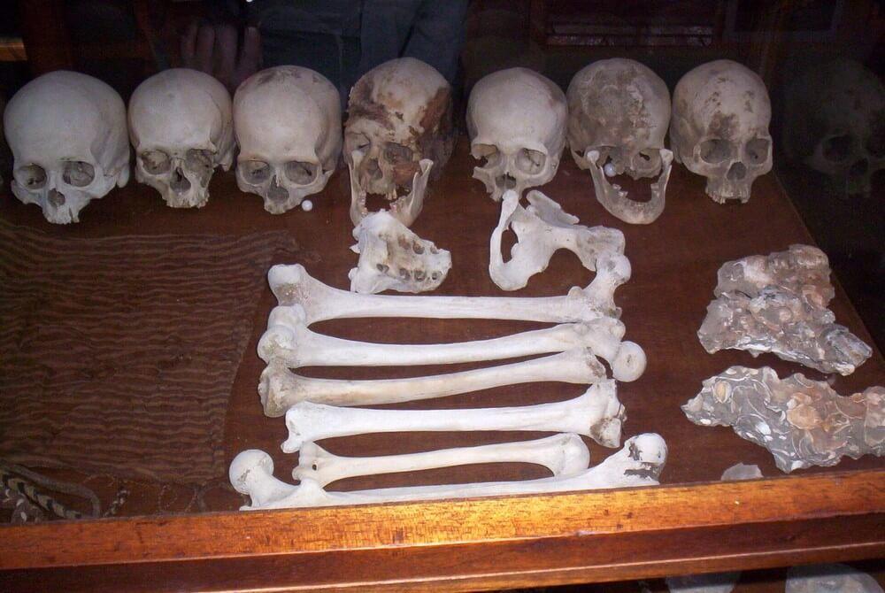 Restos óseos en el Museo Antonini