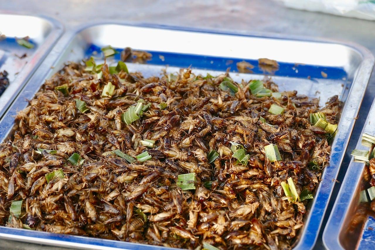 Insectos en un restaurante de Tailandia