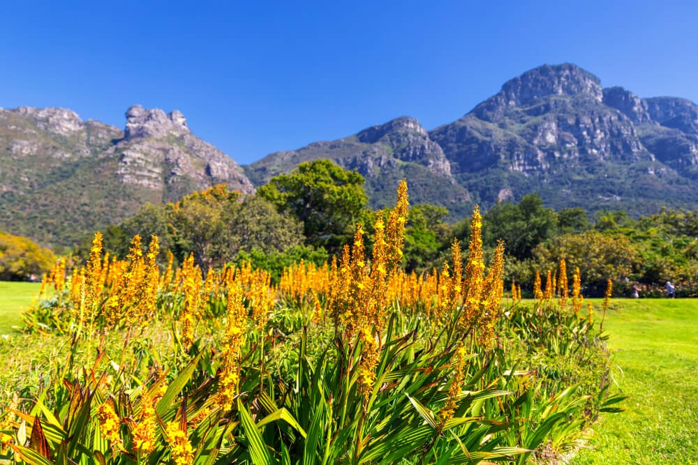 Kirstenbosch, uno de los jardines botánicos más bellos