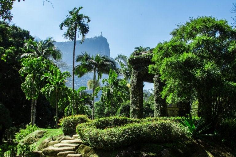 Jardín Botánico de Río de Janeiro: una auténtica maravilla