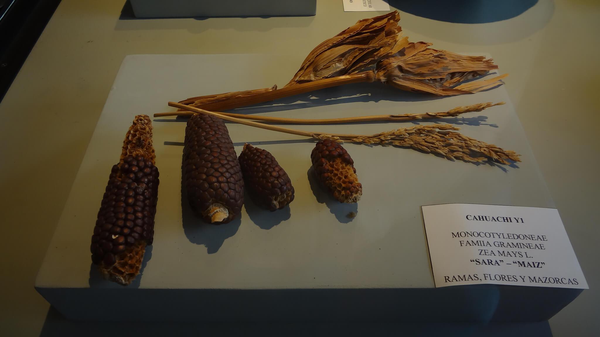 Exposición del museo Antonini
