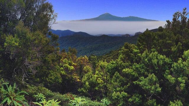 Vista del Parque Nacional de Garajonay