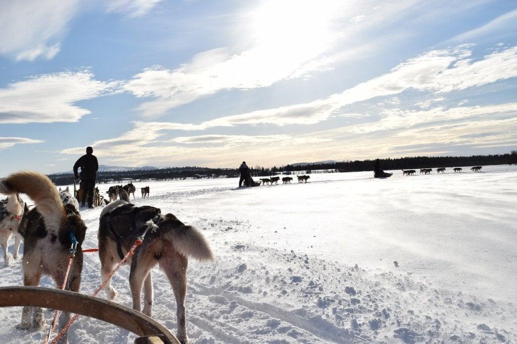 Excursión en trineo de perros por la Laponia noruega