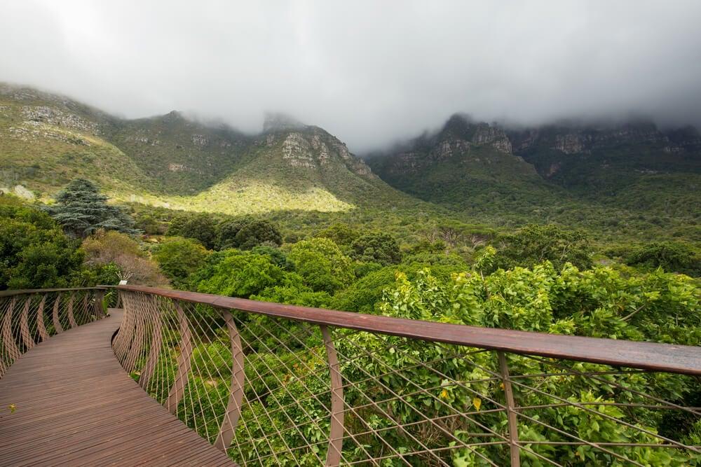 Puente en Kirstenbosch
