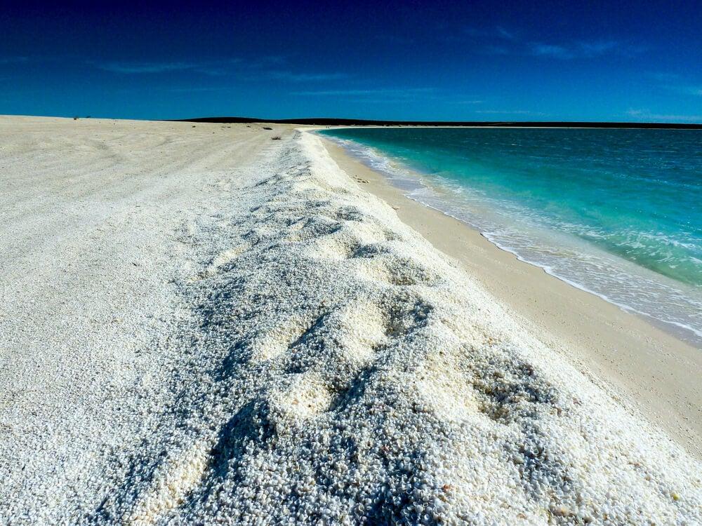 Shell Beach: una playa cubierta de conchas en Australia