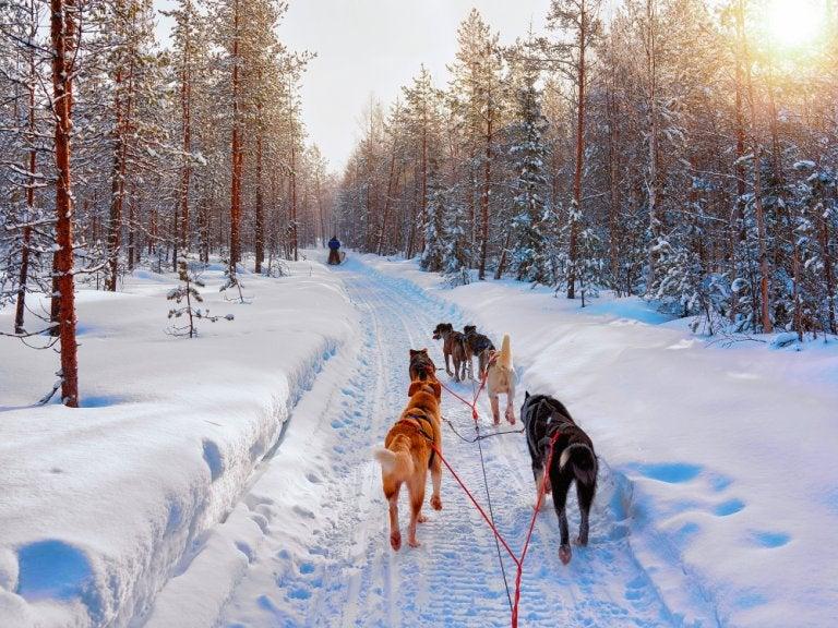 Un paseo en trineo por la Laponia noruega