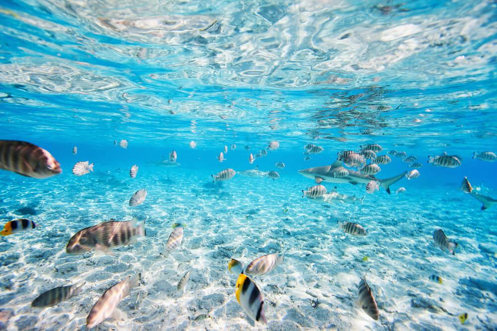 Aguas de Tahití con peces y un tiburón