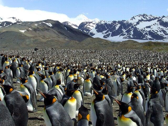Bahía de Saint Andrew llena de pingüinos