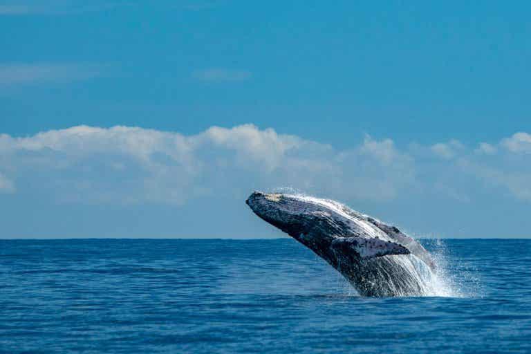 Avistar ballenas en Tahití: un espectáculo fascinante