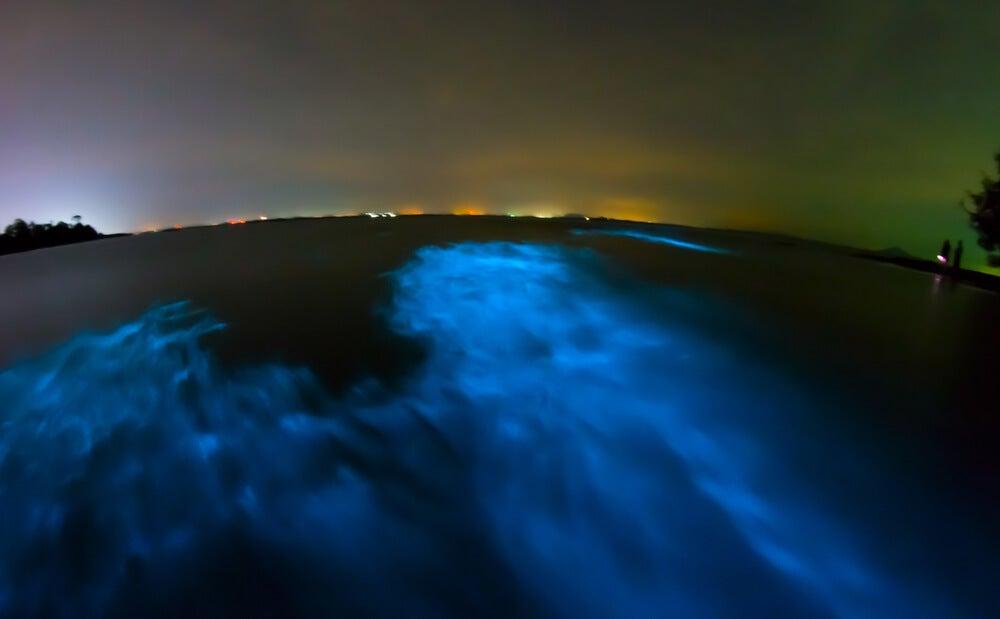 Fenómeno de bioluminiscencia