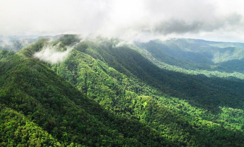 Bosque lluvioso en Belice