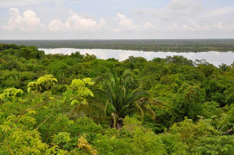 Los bosques lluviosos en Belice y su aprovechamiento