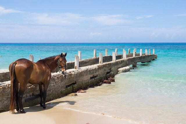 Caballo en una playa en Jamaica